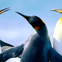Google's Penguin 2.0 update
